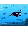 Infographics ocean sea underwater world vector image vector image