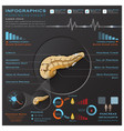 Pancreas Anatomy System Medical Infographic vector image vector image