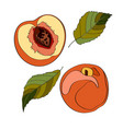 peach sliced peach half vector image vector image