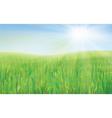 sky green grass vector image vector image