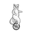 unicycle cat sketch vector image vector image