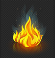 burning campfire with fire vector image vector image