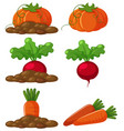 different types of vegetables in the ground vector image vector image