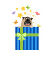 dog in present box greeting card vector image vector image