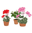 flowering houseplants vector image vector image