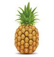 fresh pineapple isolated on white vector image