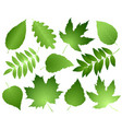green leaves and branches set vector image