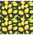Green lemon fruits with leaf on branch dark black vector image