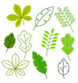 set of stylized green leaves spring or summer vector image vector image