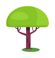 baobab short tree with an enormously thick trunk vector image vector image