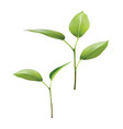 plant green leaf grow 3d vector image