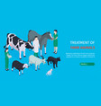 veterinary horizontal banner vector image vector image
