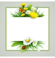 fresh spring background with grass dandelions