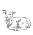 hand drawn lamb vector image vector image