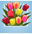 tulip flower design background floral card art vector image