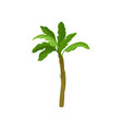 banana palm tree with bright green leaves vector image vector image