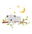 cute koala bear sleeping on a branch under a vector image