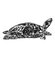 drawing a sea turtle vector image