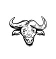 head an african buffalo or cape buffalo front vector image vector image