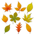 Set with leaves vector image