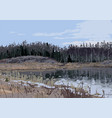view on lake and mixed forest outside of vector image