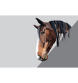 brown horse head on a grey background vector image vector image