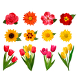 Set of beautiful flowers vector image vector image