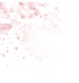 Cherry Blossom Pink sakura flowers EPS 10 vector image vector image