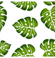floral background tropical vector image vector image