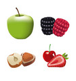fruits and nuts vector image
