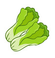 green lettuce cartoon isolated vector image