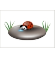 Sad ladybug on a stone isolated vector image