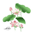 set hand drawn lotus flowers and leaves vector image