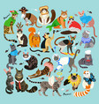 pattern with cats dressed in costumes vector image vector image