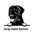 peeking dog - curly-coated retriever breed - head vector image vector image
