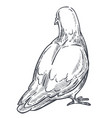 pigeon or dove isolated sketch icon peace symbol vector image vector image