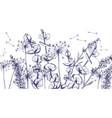 summer lavender flowers line art hand drawn vector image vector image