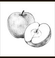 apple hand drawn vector image
