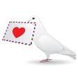 Dove with a love letter vector image vector image