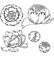 flower set in cartoon style vector image