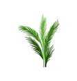 young palm tree with green pinnate leaves vector image vector image