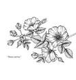 dog rose flower and leaf hand drawn botanical vector image vector image