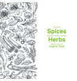 hand drawn herbs and spices background vintage vector image