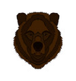 a bear s head graphics vector image