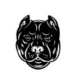 head pit bull or pitbull front view retro vector image vector image