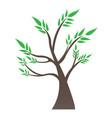 isolated bonsai tree vector image