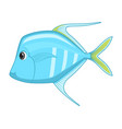 lookdown fish on a white background vector image vector image