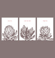 minimalistic trendy cards with protea flowers vector image vector image