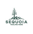 modern tree sequoia logo vector image vector image