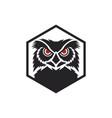 owl bird logo vector image vector image
